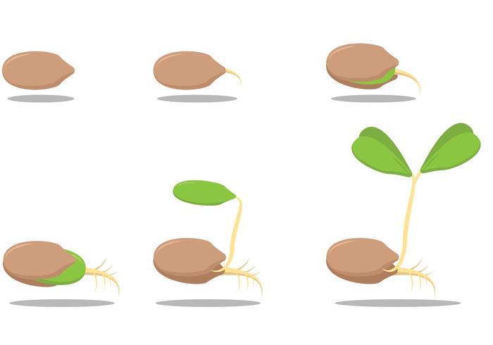 Growing Seed Vectors.
