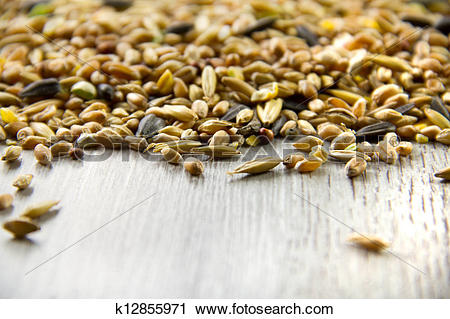 Stock Photography of Bird seed mix, differential focus k12855971.