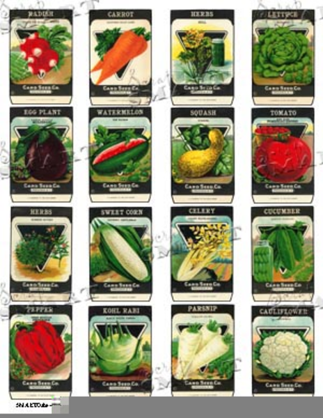 Vintage Seed Packets Clipart.