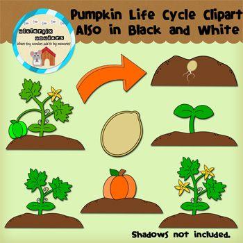 Clipart: Pumpkin Life Cycles.