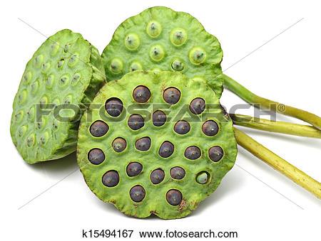 Lotus Seed Pod Clip Art.