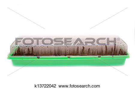 Stock Photo of seed tray box with lid on collecting condensation.