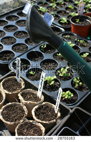 Seed tray outline clipart.