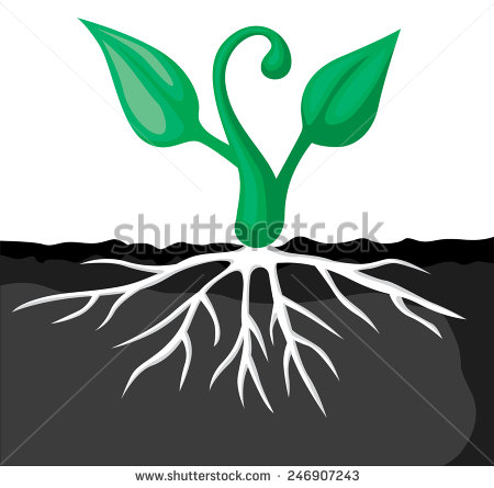 Sprouts Seed Tray Clipart.