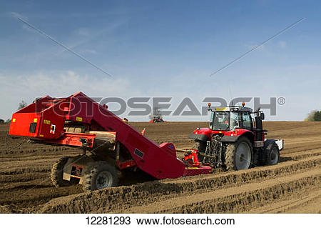 Stock Photo of Preparing potato seed bed, using Grimme stone.