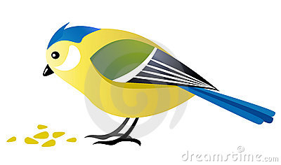 Blue Tit Bird Eating Seeds Royalty Free Stock Photo.