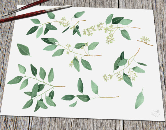 Eucalyptus greenery clipart willow seeded clip art by DioFlow.