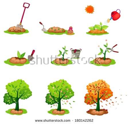 Tree Seed Stock Photos, Royalty.
