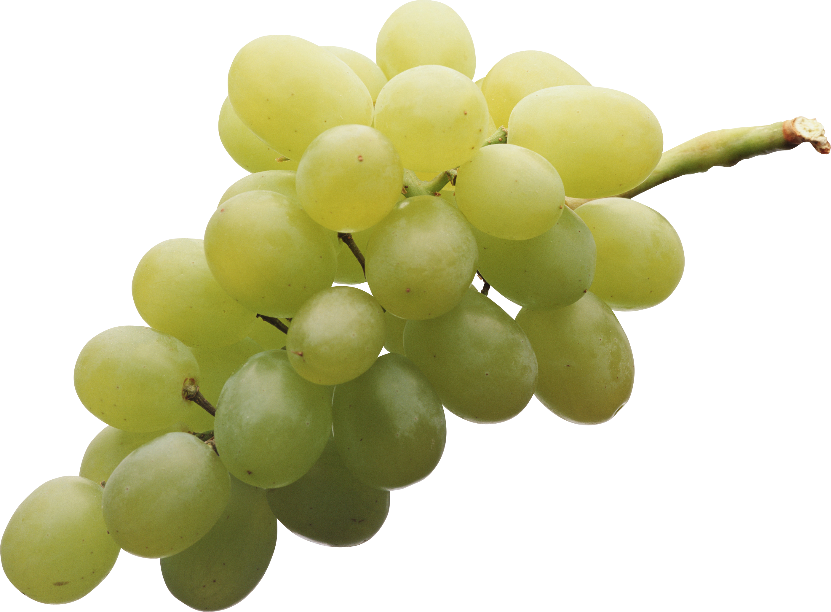 One green grape clipart.
