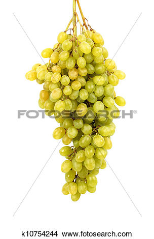 Stock Photo of Seedless grapes k10754244.