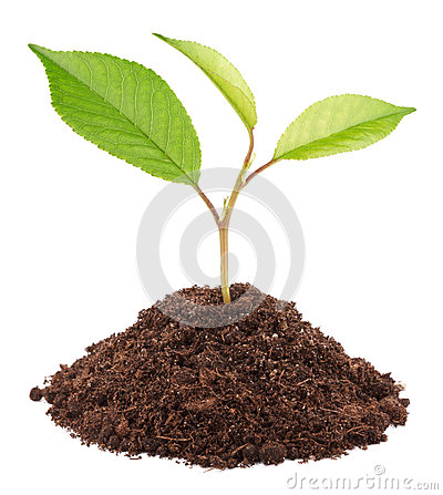 Grey Tree Seedling Clipart.