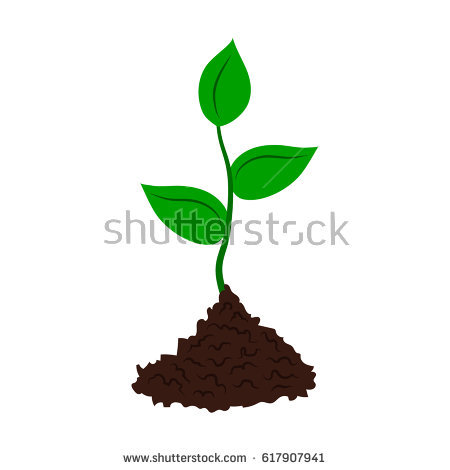 Seedling Stock Images, Royalty.