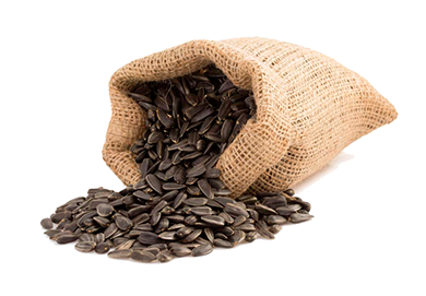 Sunflower seeds PNG images free download.