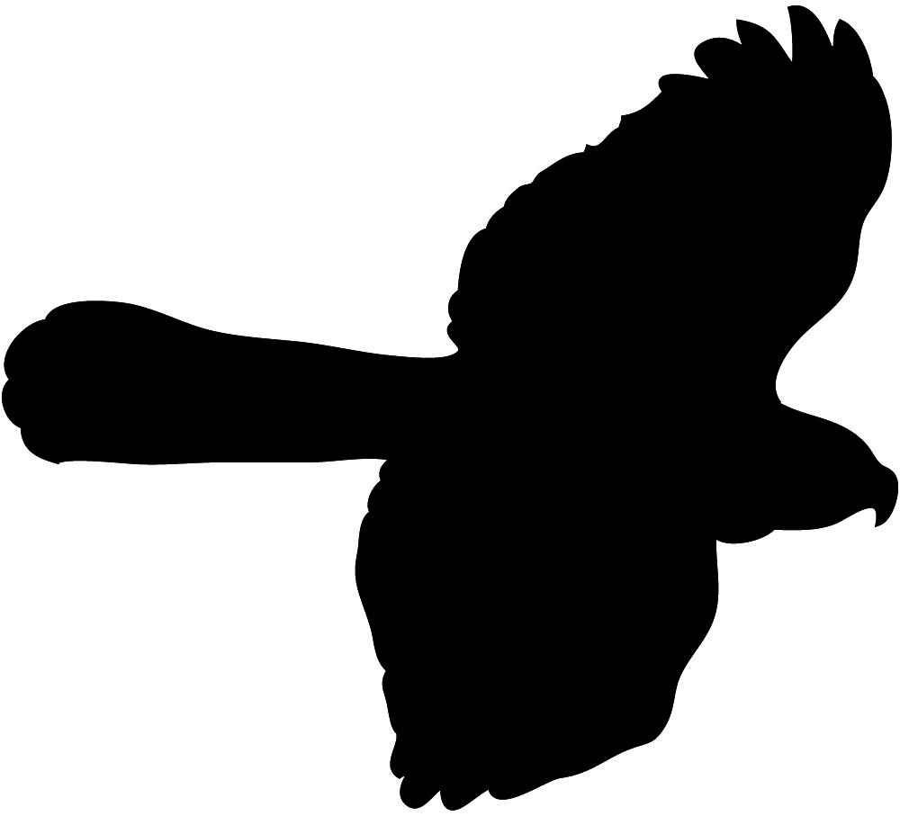 Hawk in flight seen from below.