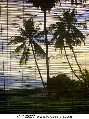 Picture of Palm trees seen through window blinds x14125277.