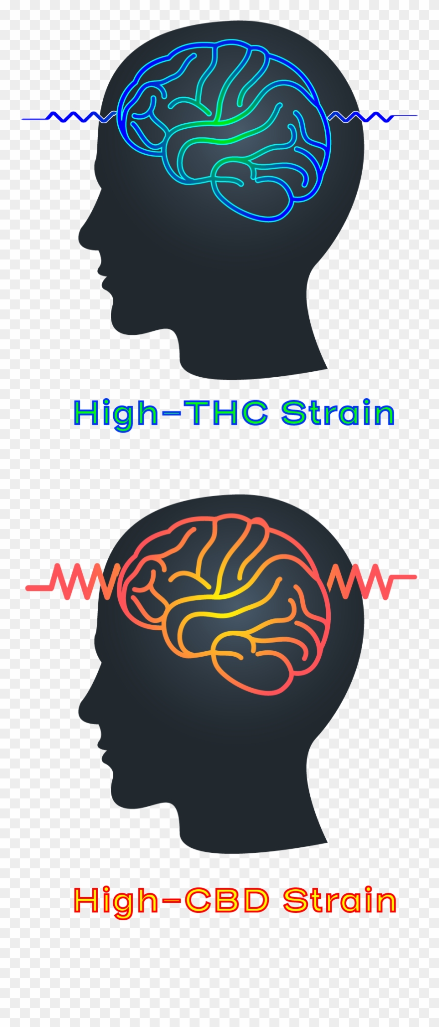 High Thc High Cbd Strain Epilepsy Seizure Clipart (#2233634.