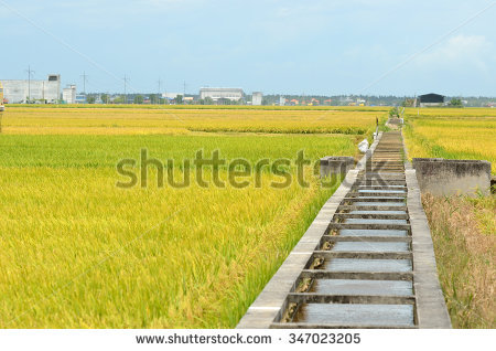 Sekinchan Stock Photos, Images, & Pictures.