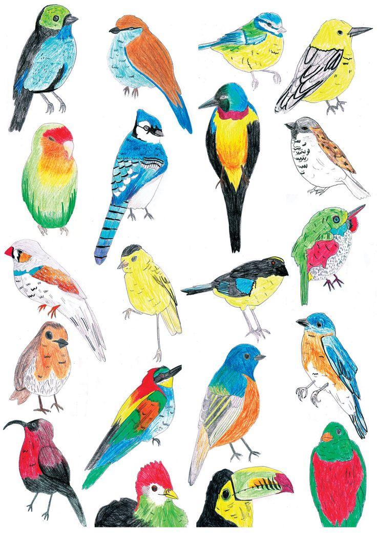 78 Best ideas about Tropical Birds on Pinterest.