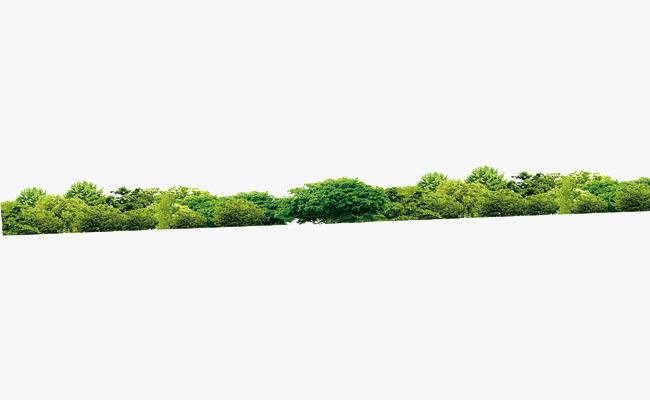 Download Free png Vistas A La Selva Selva Los árboles Bosque.