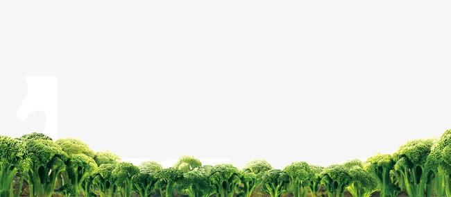 Arboles Selva Los árboles Verde Selva I #119593.