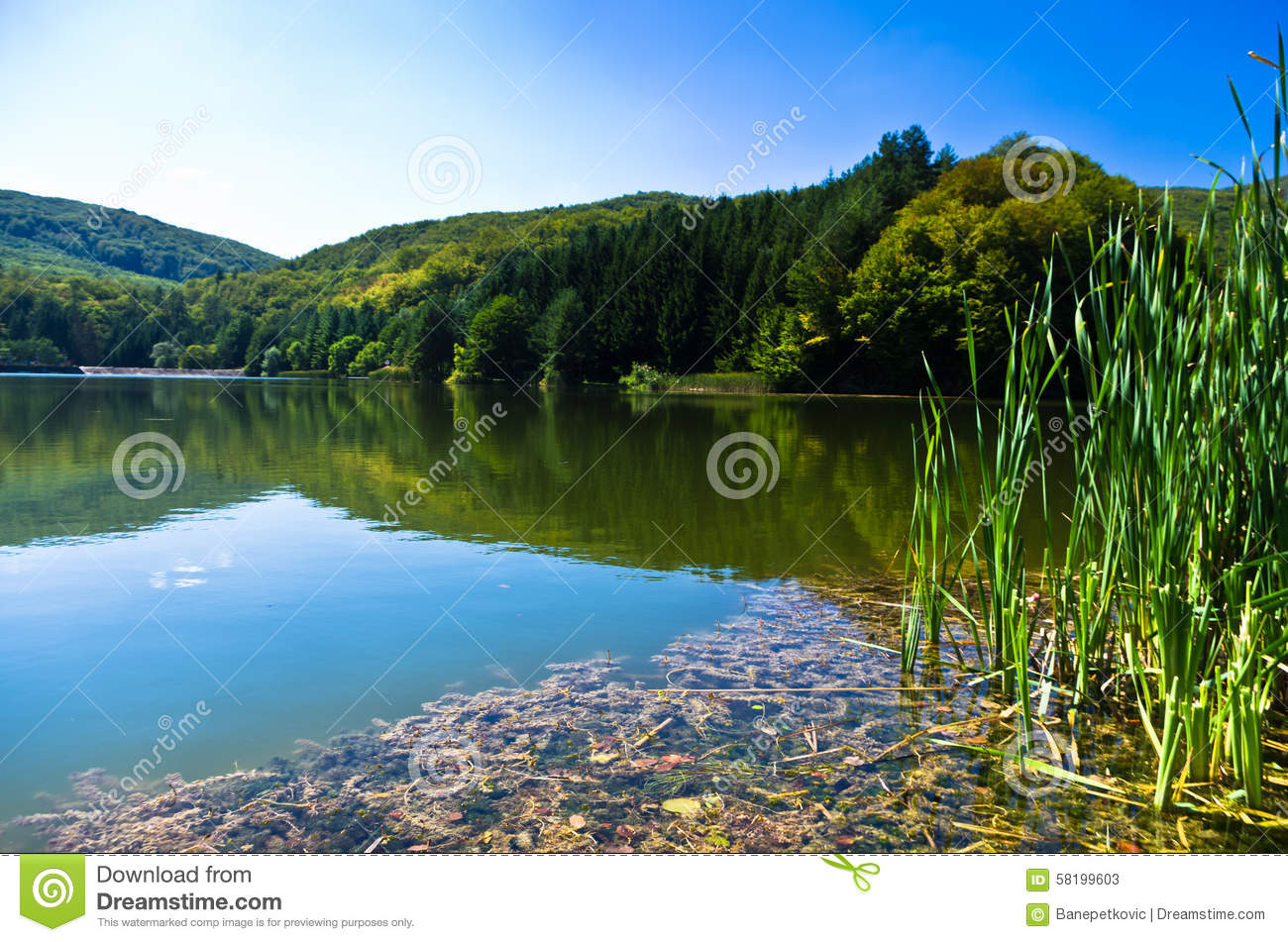 Beautiful Nature And Greenery At The Lake In Semenic National Park.