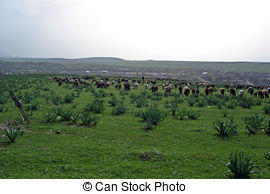 Stock Photos of Flock of sheep in Semenic Mountains.