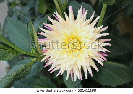Orange Cactus With Pink Flower Stock Photos, Royalty.