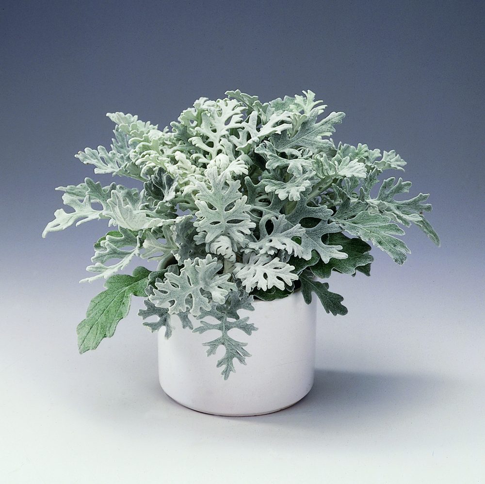 Floradania Marketing: Plants.