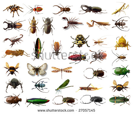 Insect insect free stock photos download (1,039 Free stock photos.