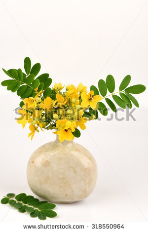 Senna Flower Stock Photos, Royalty.