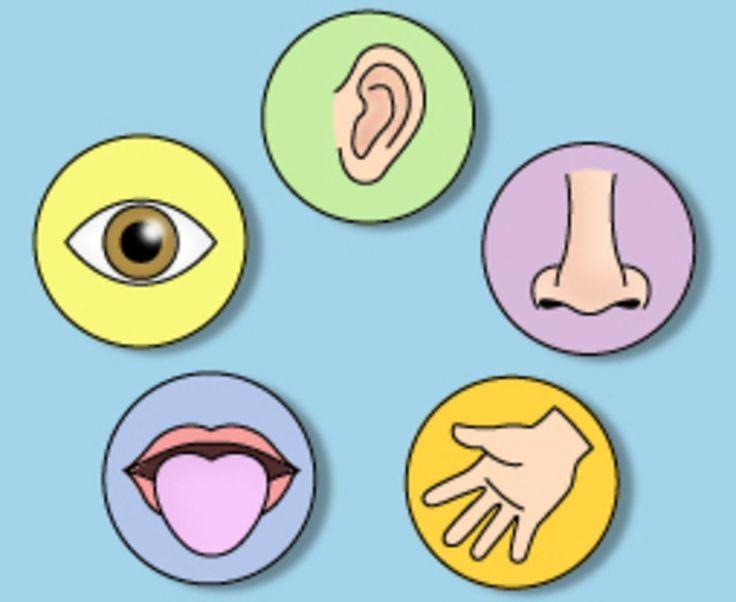 5 Sense Organs Clipart.