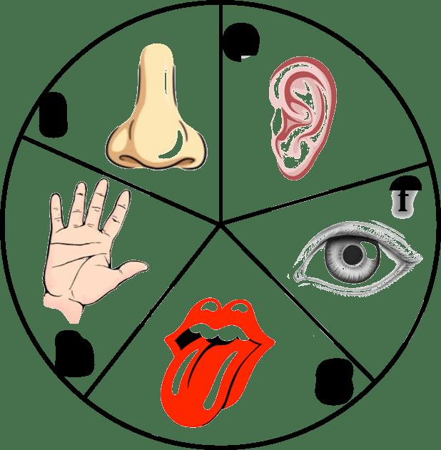 Tongue Clipart 5 Senses.