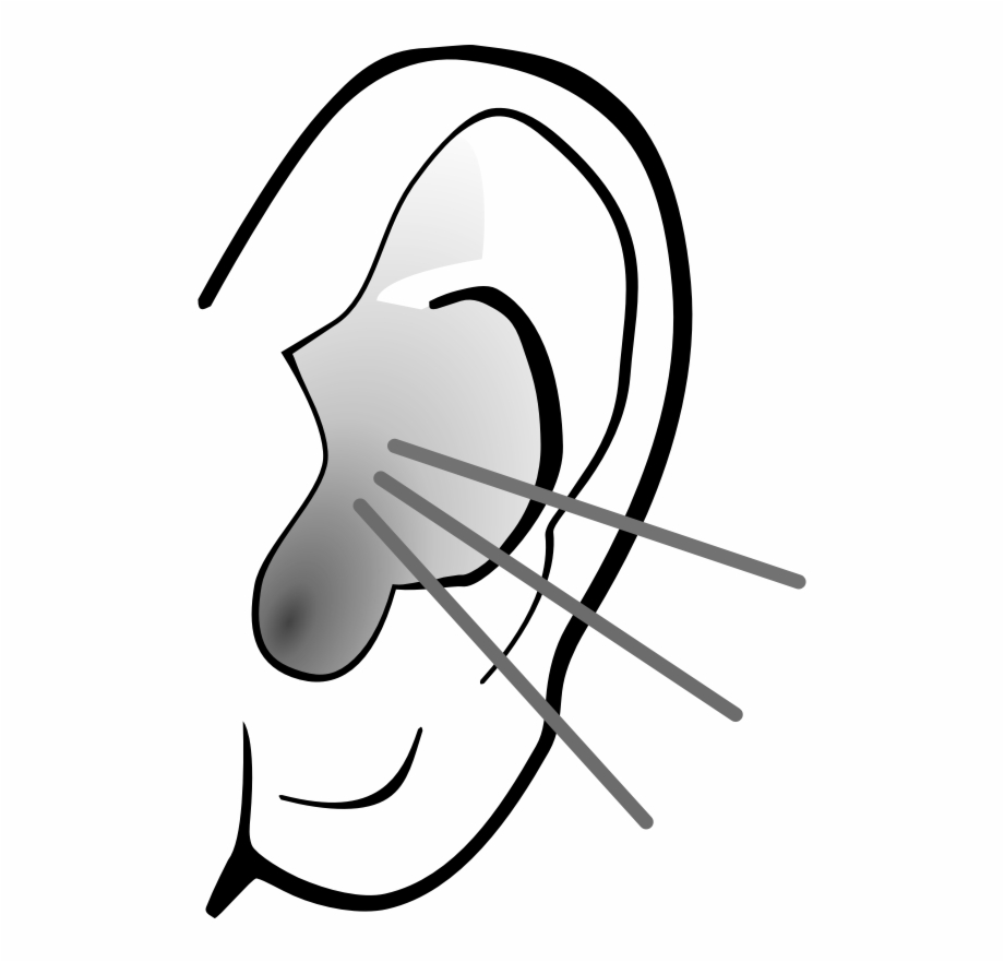 Listening Ear Clipart Sense Organs Ear Clipart.