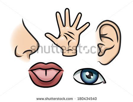 5 Senses Clipart.