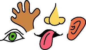 Five senses clipart.