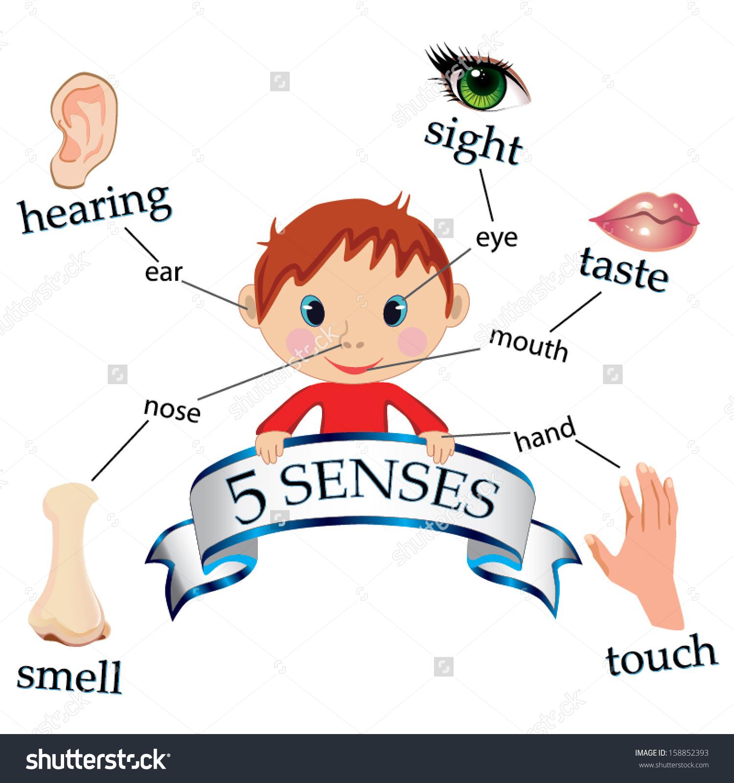 Clip Art. 5 Senses Clipart. Stonetire Free Clip Art Images.