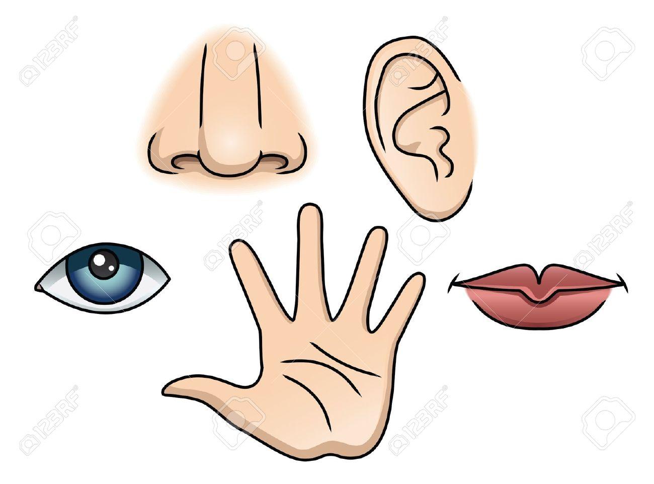 Five Senses Clipart & Five Senses Clip Art Images.
