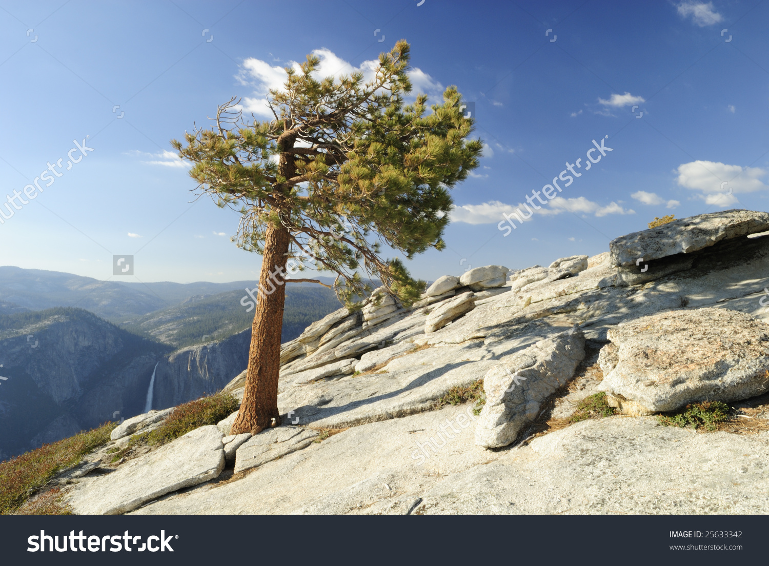 Lone Pine Tree On Top Of Sentinel Dome Over Yosemite Valley Stock.
