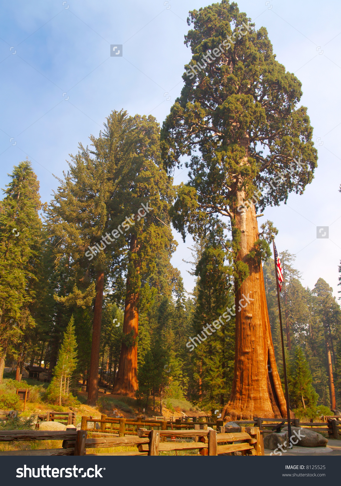 The Sentinel, A Giant Sequoia In Sequoia National Park Stock Photo.
