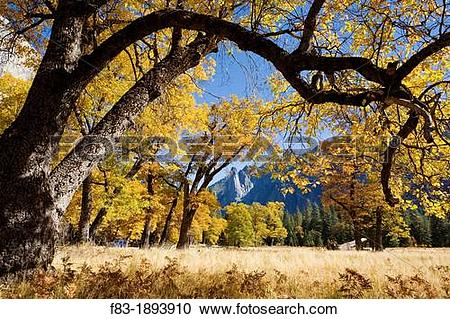 Stock Photography of Yosemite Valley, Yosemite National Park.