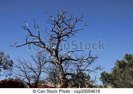 Stock Photography of Sentinel Tree and Moon.