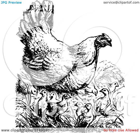 vintage chicken clipart black and white.