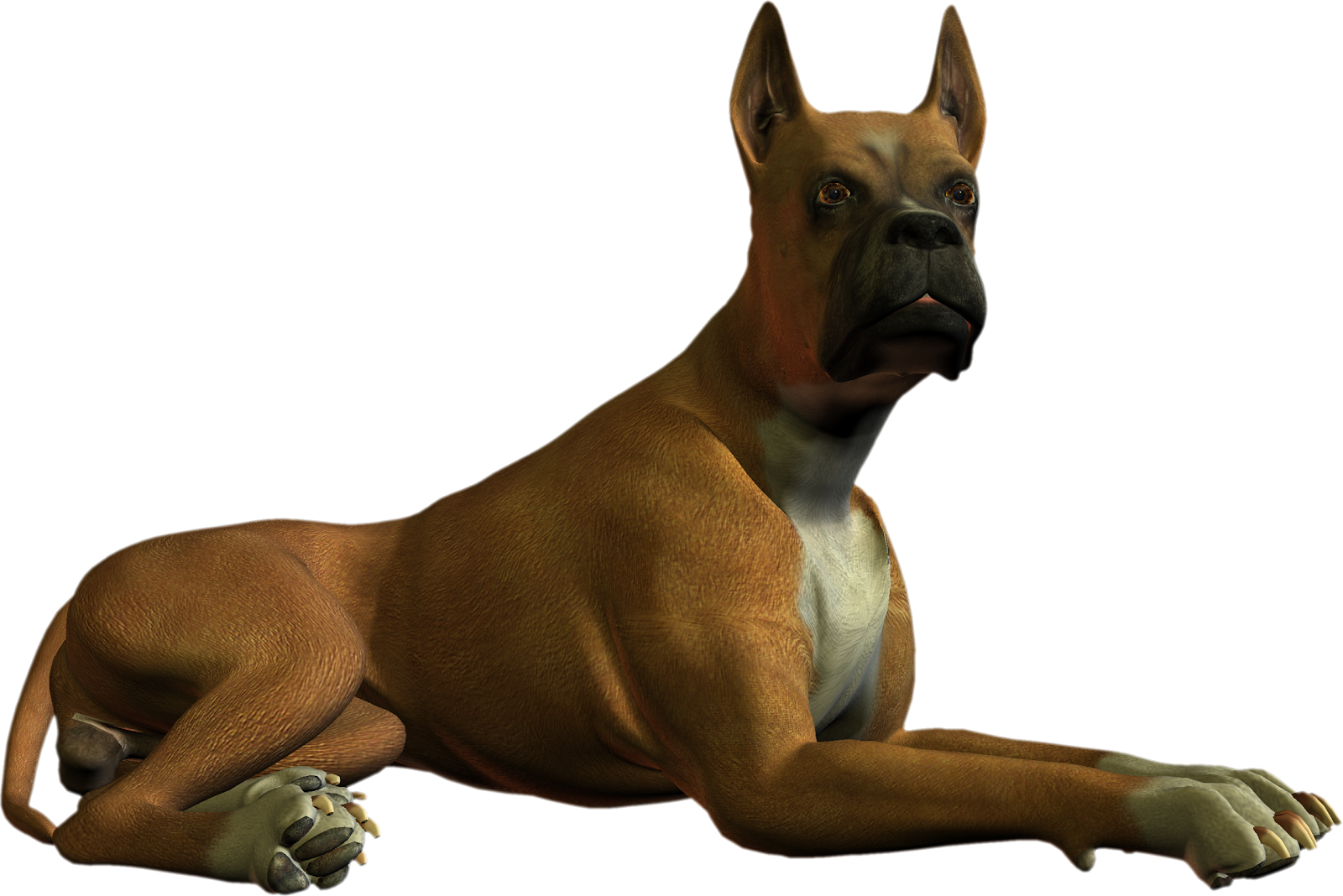 Free High Resolution graphics and clip art: dog png.