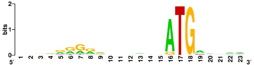 Sequence Logo for Shine.