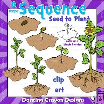Sequence of Events Clip Art: Seed Growing to Flower.