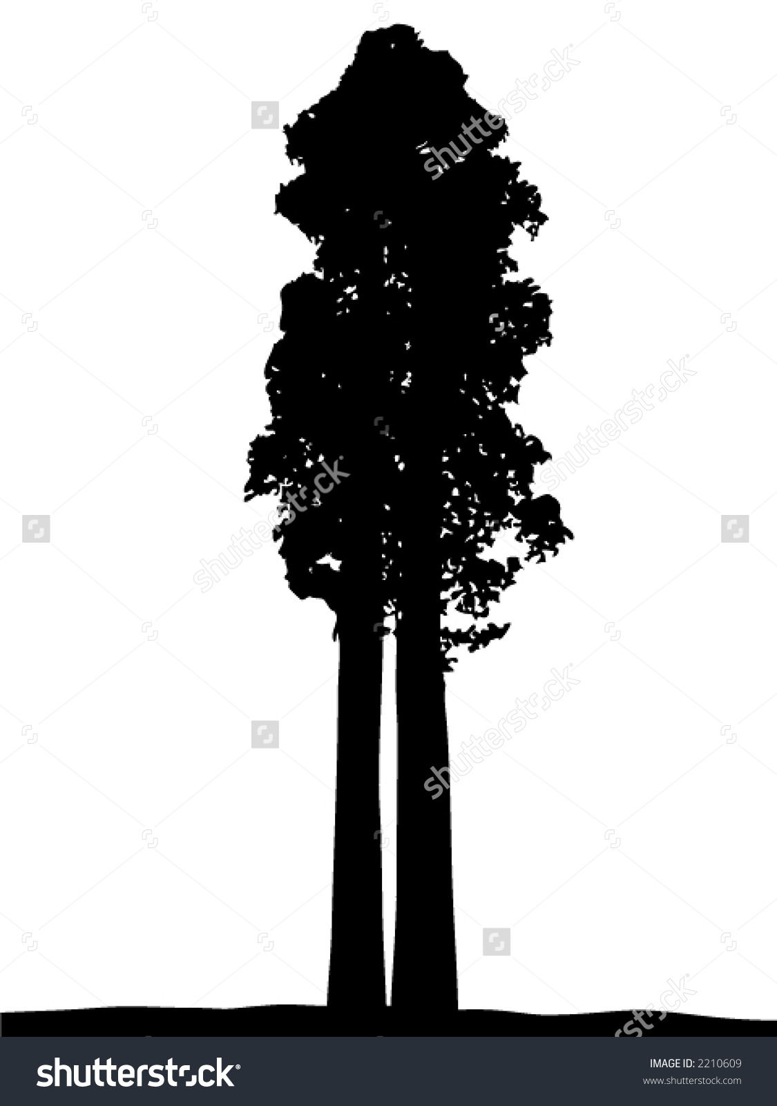 Giant Sequoia Silhouette Stock Vector 2210609.