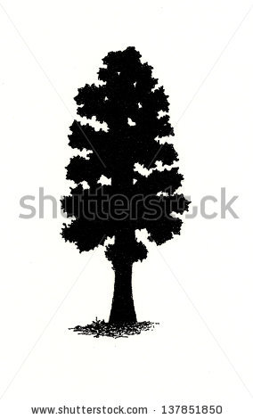 Sequoia Tree Clip Art.