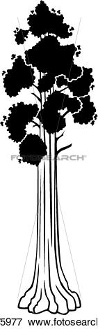 Clip Art of , sequoia, tree, varieties, u13175977.