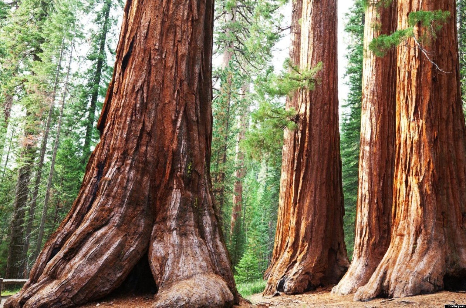 1000+ images about Sequoia National Park on Pinterest.