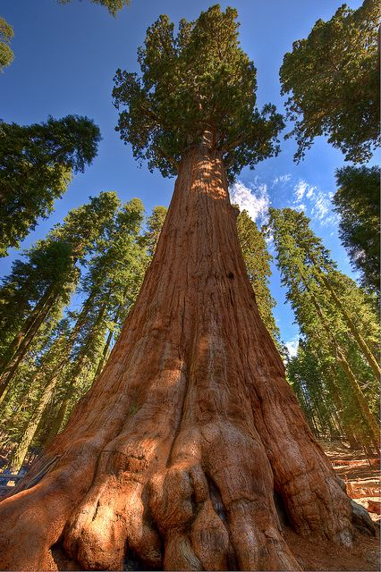 1000+ ideas about Sequoia California on Pinterest.